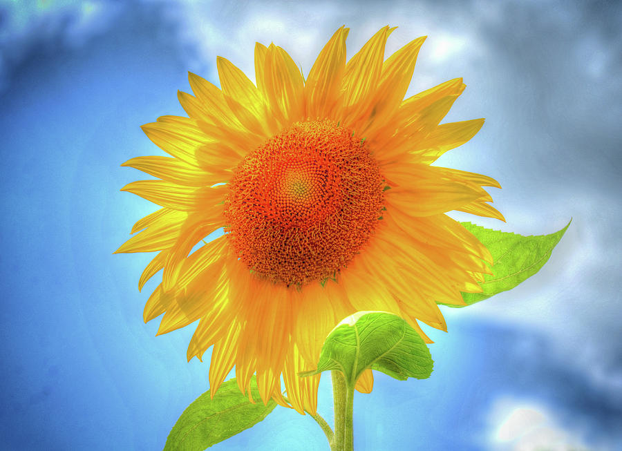 Sunflowers Make Me Smile by Rodney Campbell