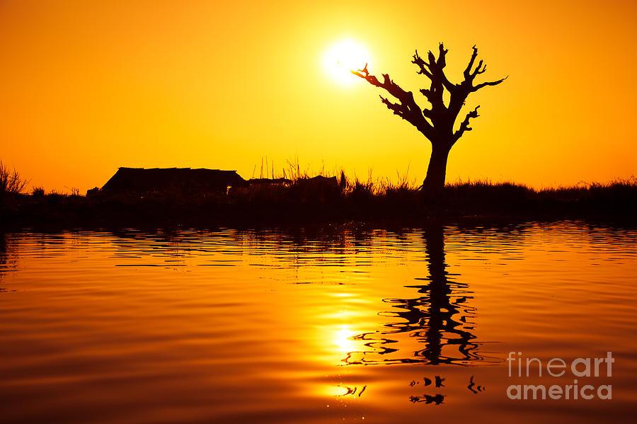 Sun Photograph - Sunfruit by Irina No