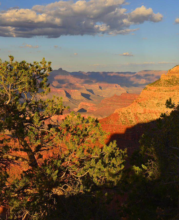 Grand Canyon Photograph - Sunkissed Afternoon by Stephen  Vecchiotti