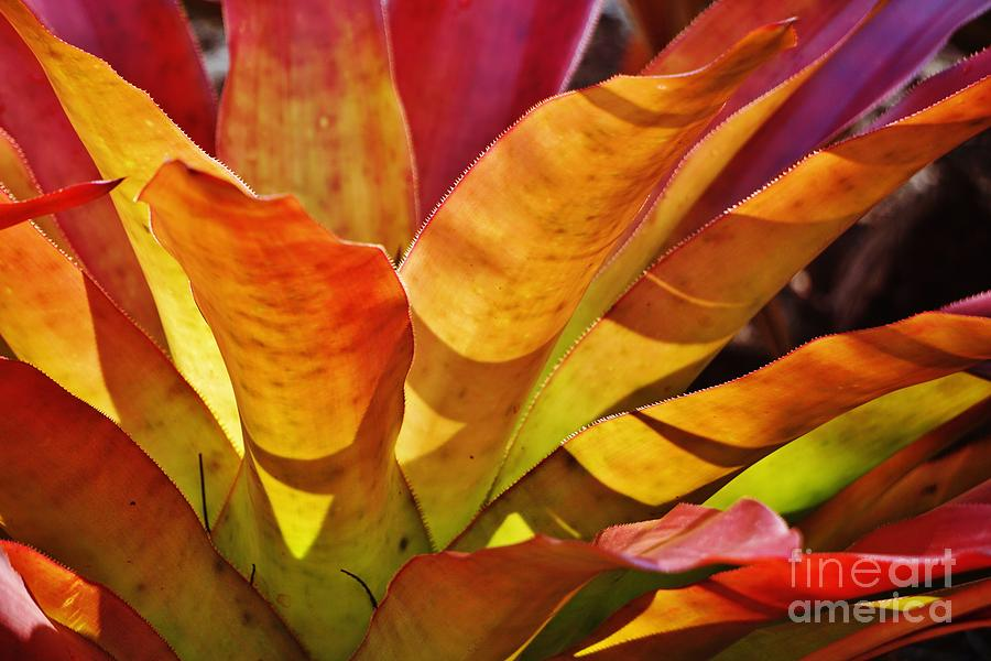 Leaves Photograph - Sunlight And Colour by John Clark