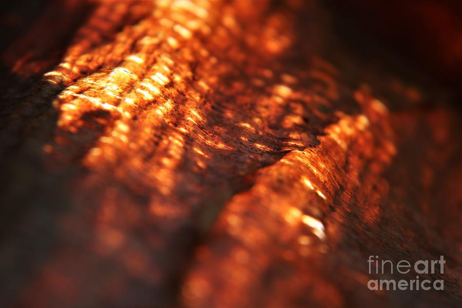 Sunlight Behind The Bark Of A River Birch Tree Photograph