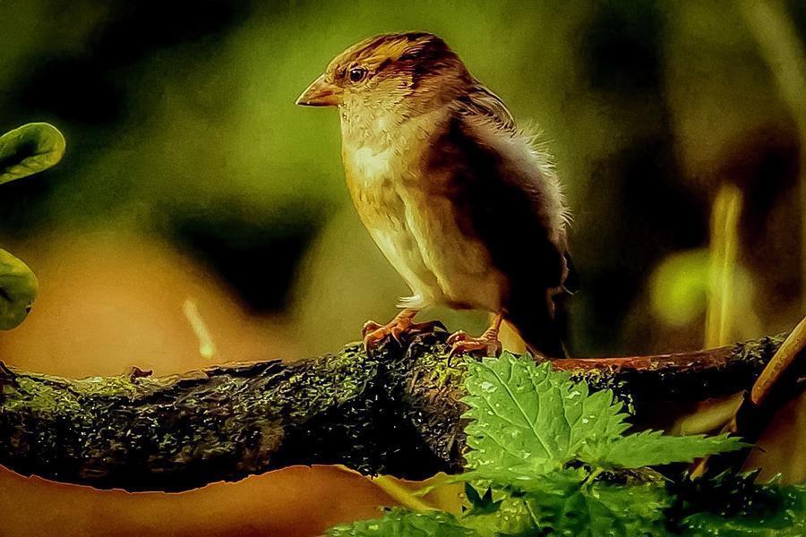 Sunlight bird by Cliff Norton