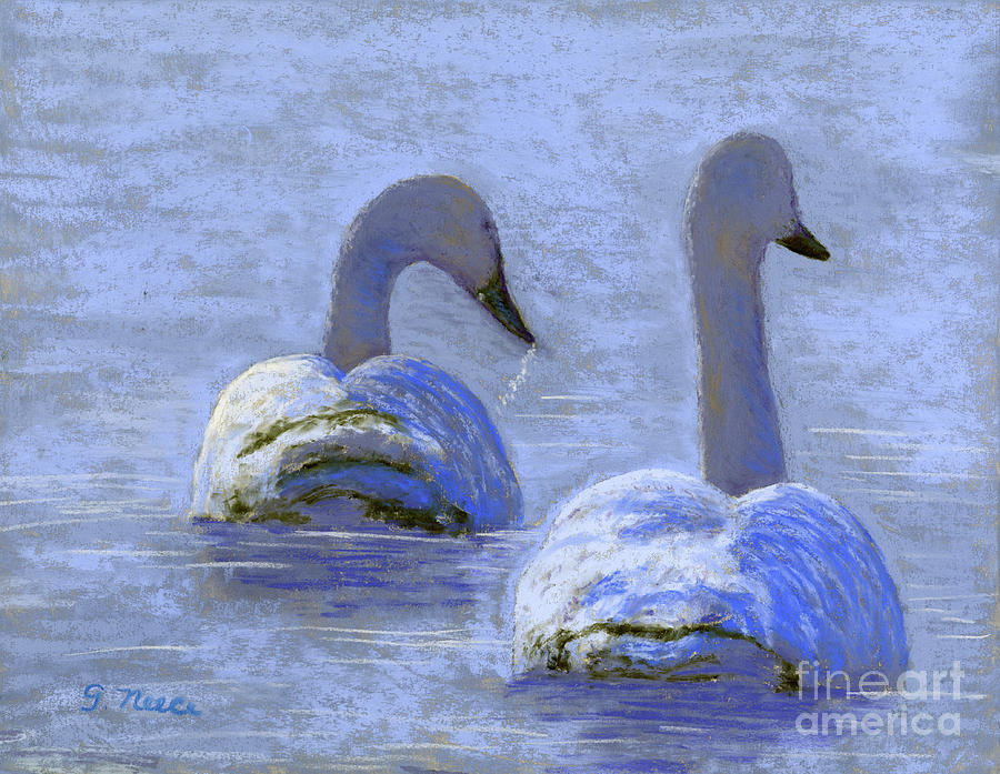Sunlight on Swans by Ginny Neece