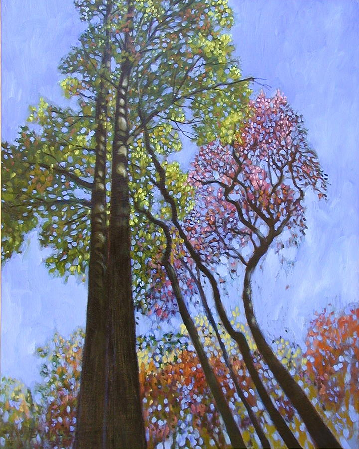 Sunlight On Upper Branches Painting by John Lautermilch