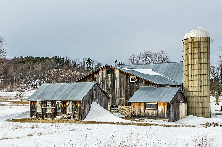 Sunlit Barns and Silos in Winter by Sue Smith