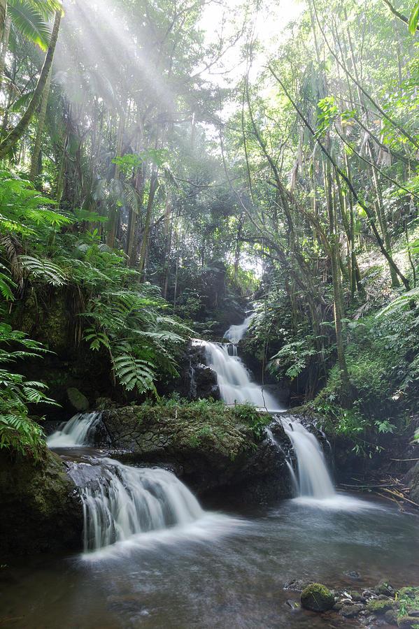 Sunlit Falls by John Daly