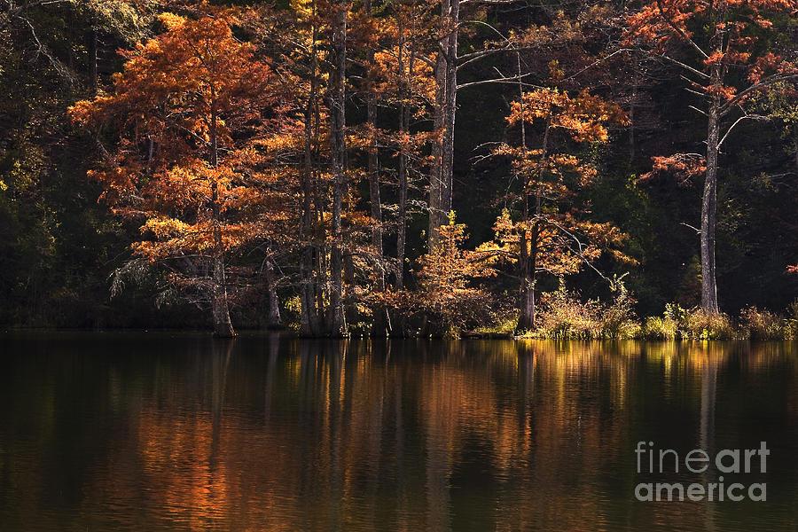 Landscape  - Sunlit Glow by Tamyra Ayles