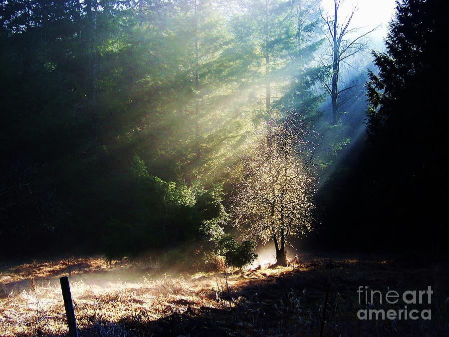 Sunlit by Julie Rauscher