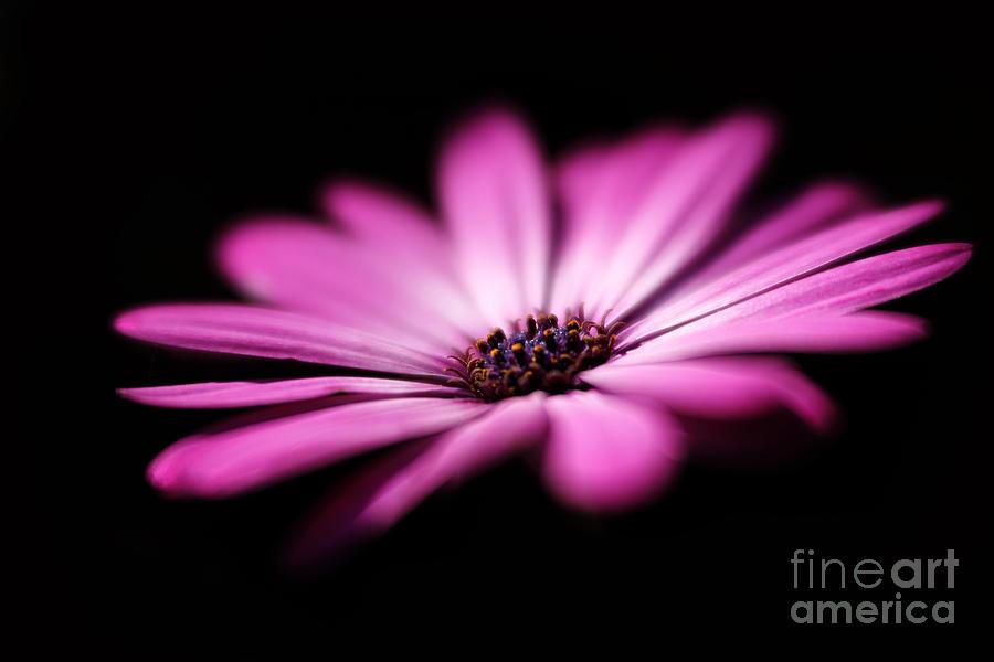 Sunlit... Photograph