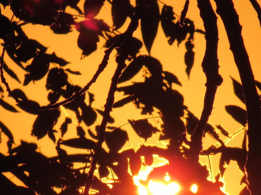 Sunlit Shadows Photograph by Esther Race