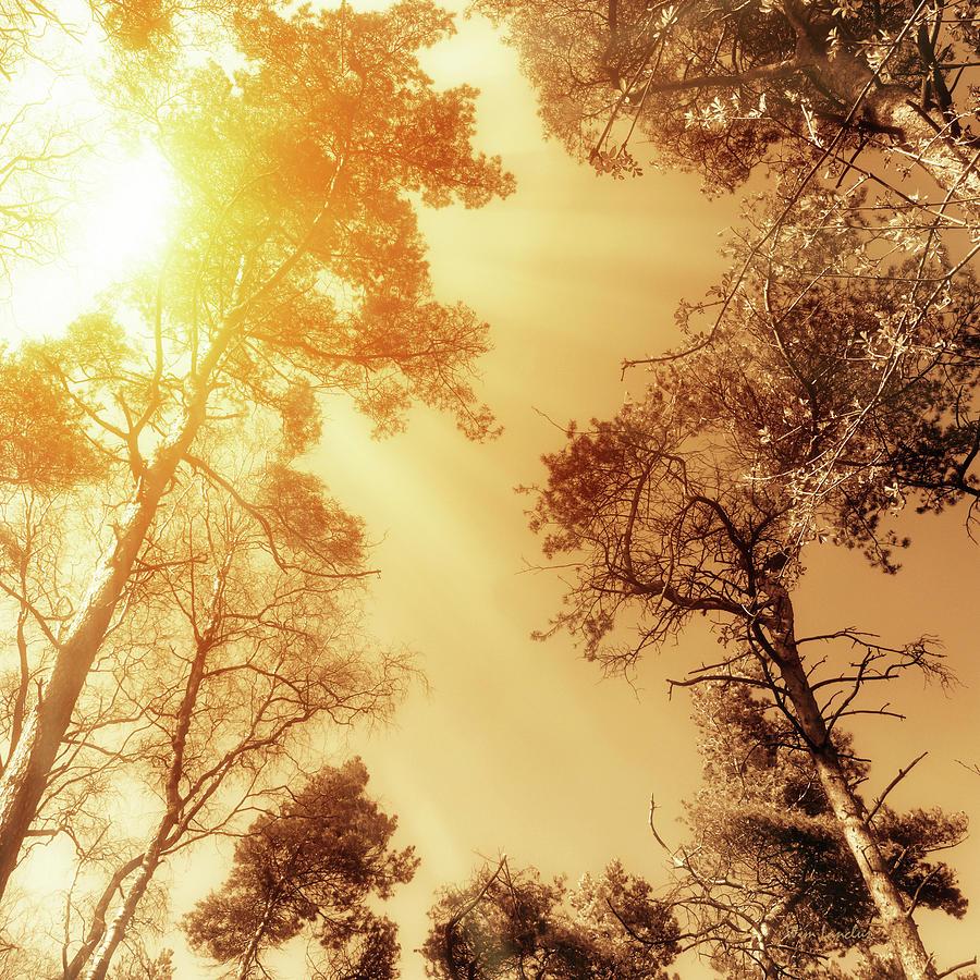 Sunlit Photograph - Sunlit Tree Tops by Wim Lanclus