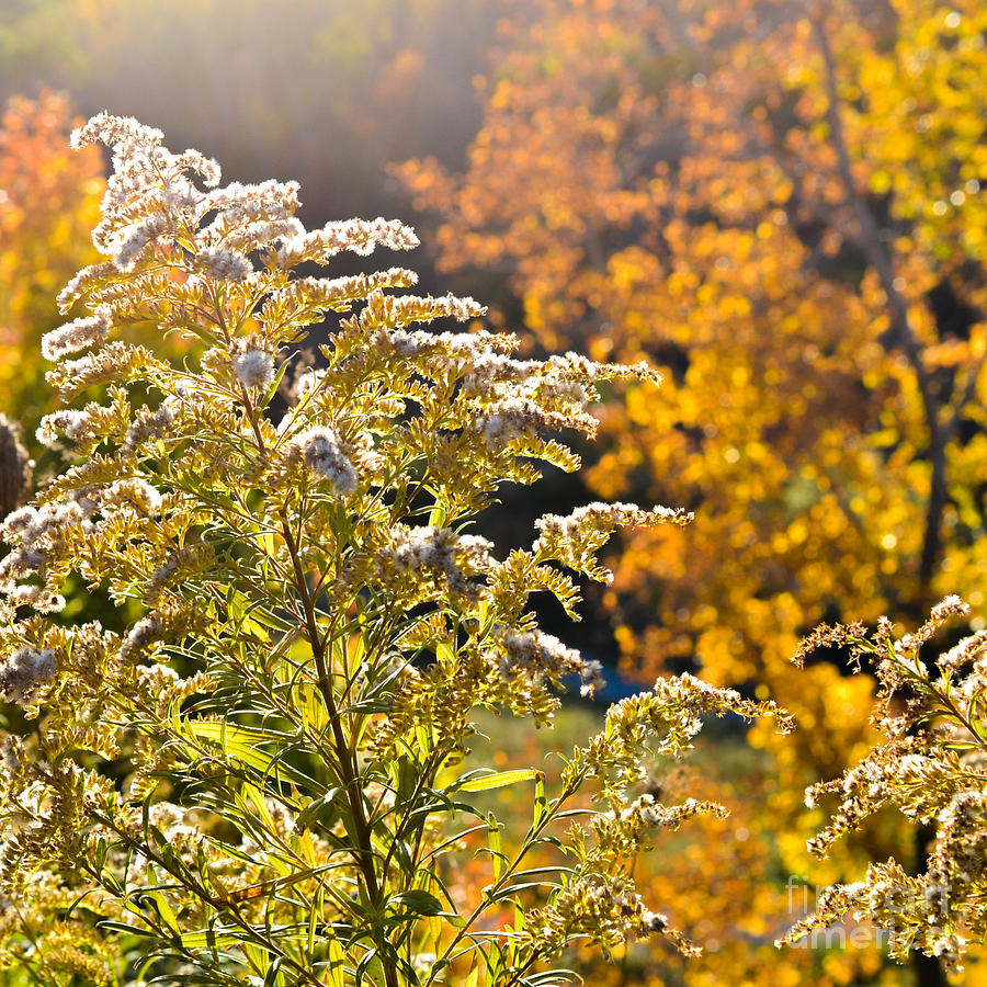 Wildflower Photograph - Sunlit Wildflower by Alana Boltwood