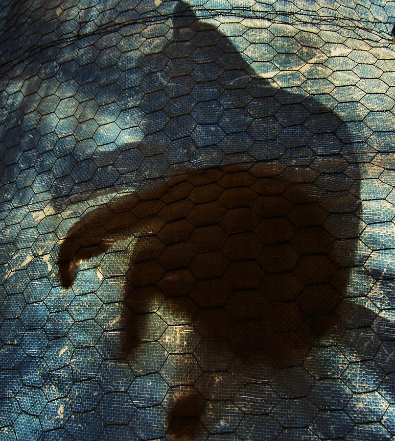 Cat Photograph - Sunning Shadow by David Sutter