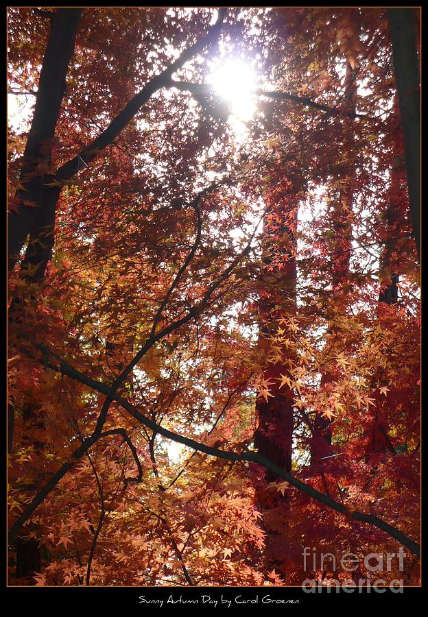 Fall Photograph - Sunny Autumn Day Poster by Carol Groenen