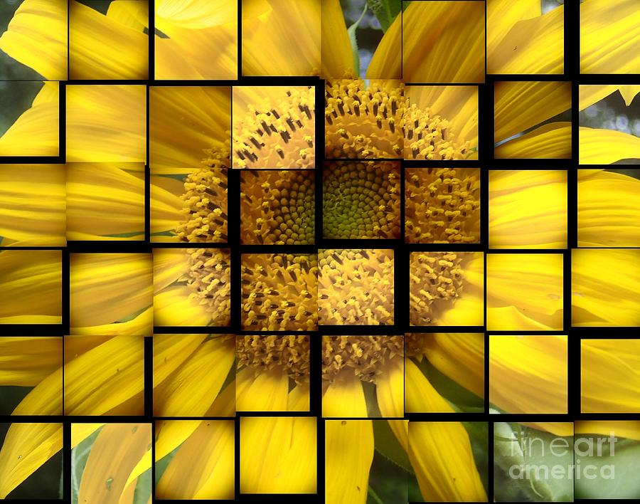 Flower Photograph - Sunny Composition by Christina Verdgeline