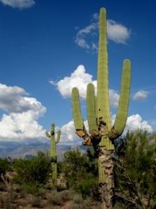 Saguaro Photograph - Sunny Day by Audrey Kanekoa-Madrid