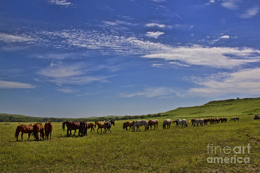 Sunny Day in the Flint Hills by Crystal Nederman