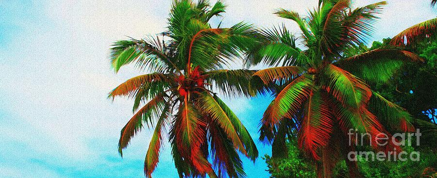 Palm Photograph - Sunny Palms by Perry Webster