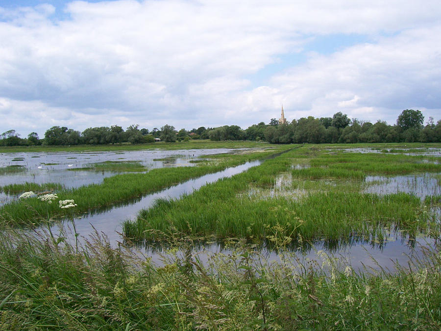 Sunny Wetland With Church Spire Photograph