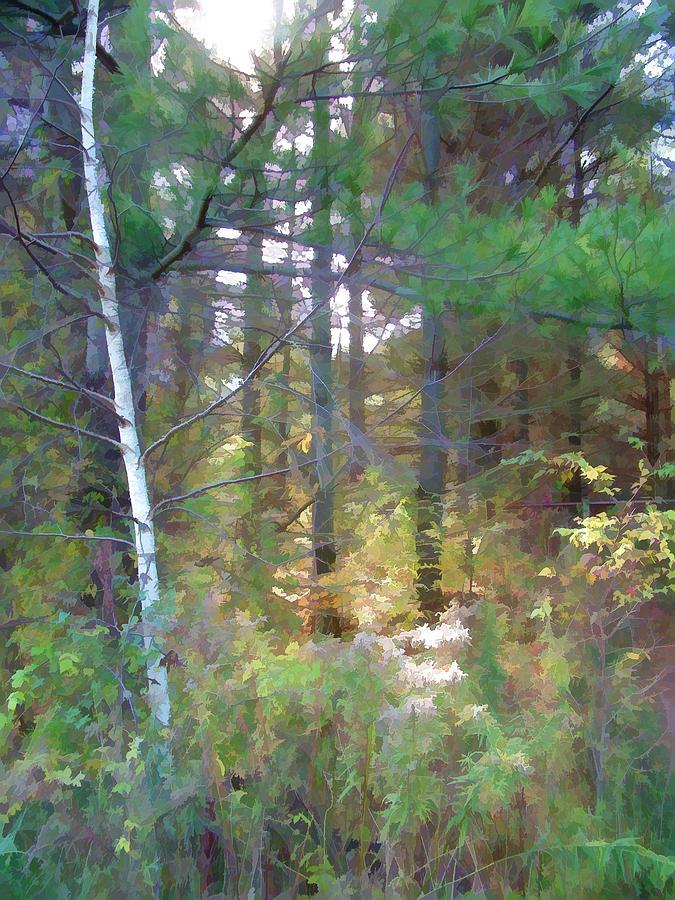 Sunny Wood Digital Art by Art Tilley