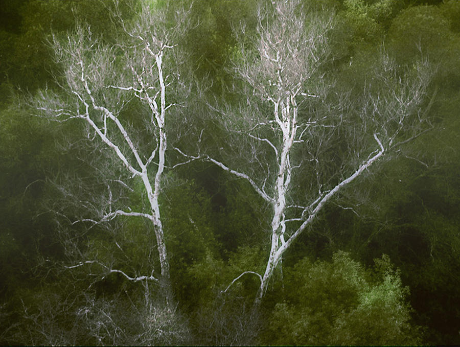 Landscape Photograph - Sunol - Twins by Karen  W Meyer