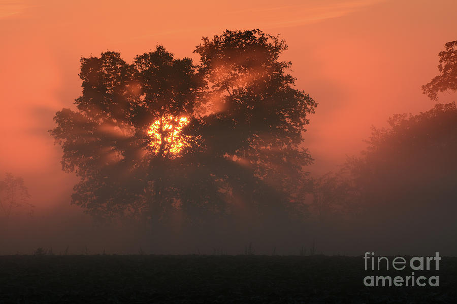 Sunray by Charles Owens