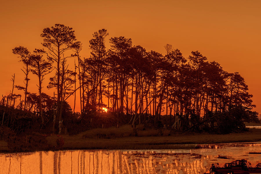 Sunrise Along A Tree Line by William Bitman