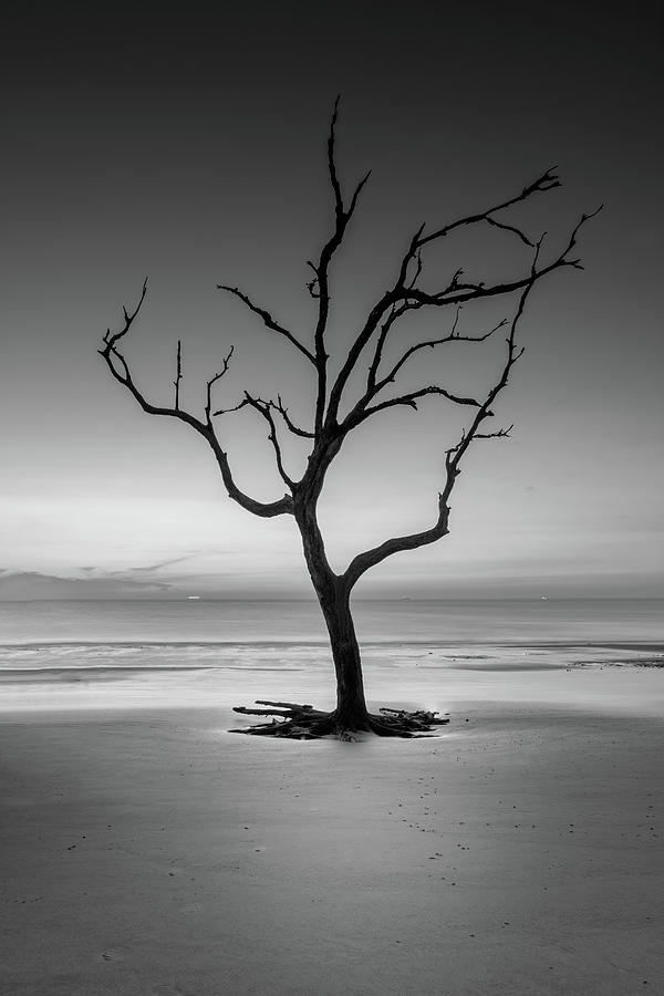 Sunrise And A Driftwood Tree In Black and White by Greg Mimbs