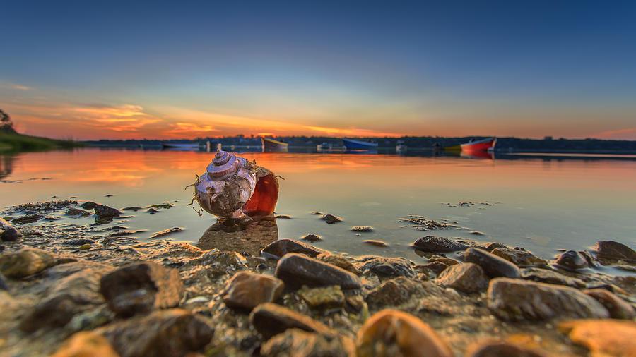 Shells Photograph - sunrise and Shell On The Beach by Dapixara Art