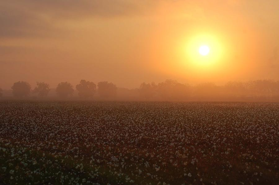 Mobile Digital Art - Sunrise And The Cotton Field by Michael Thomas