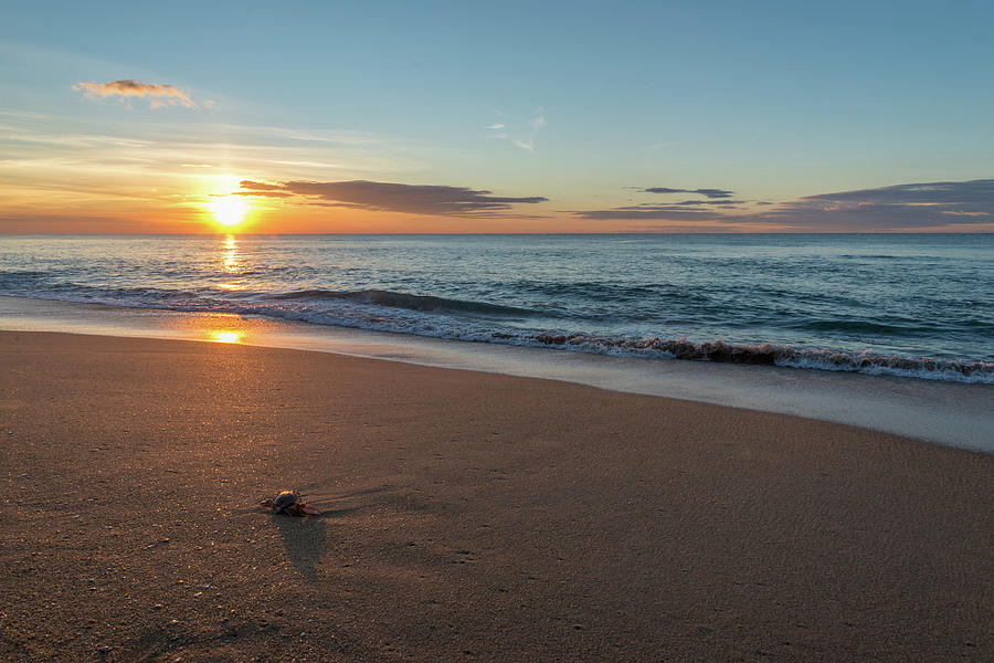 Sunrise at the beach with a crab Photograph by Michael Garner