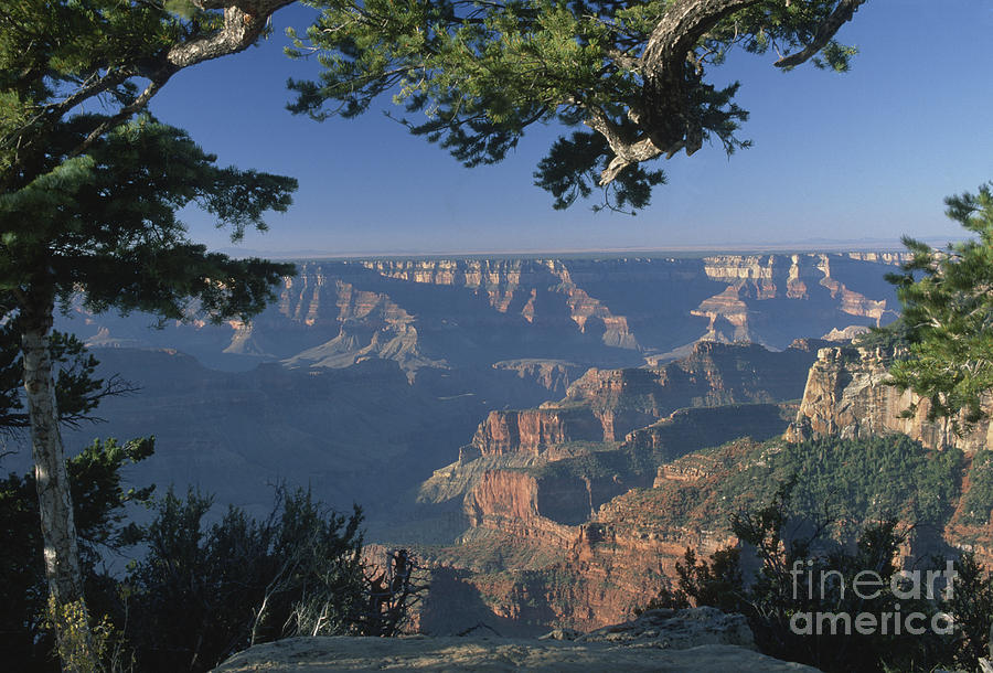 Grand Canyon Photograph - Sunrise At The North Rim by Sandra Bronstein