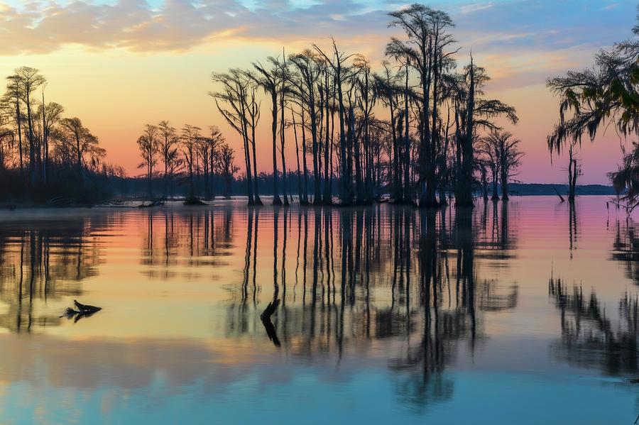 Sunrise, Bald Cypress of NC  by Cindy Lark Hartman