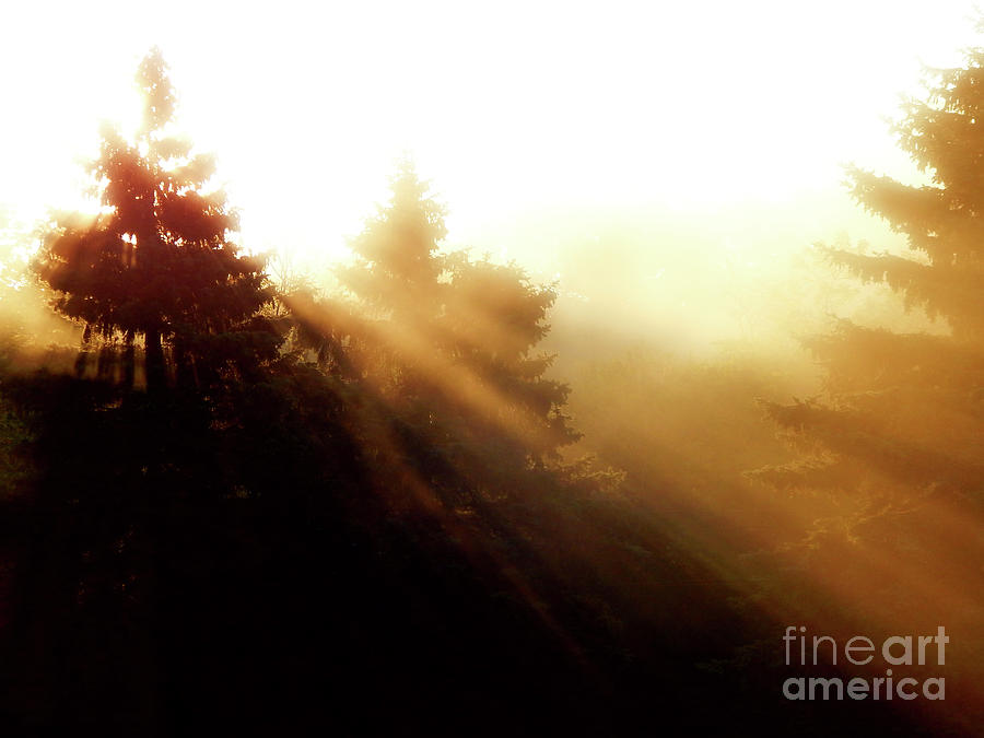 Sunrise Photograph - Sunrise Behind Pine Trees by Phil Perkins
