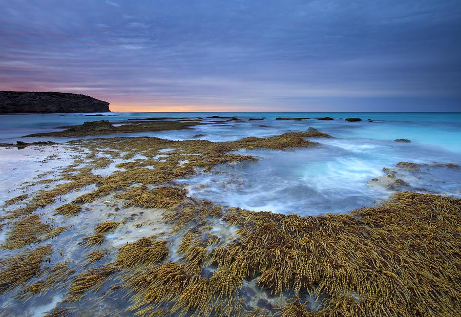 Seaweed Photograph - Sunrise Beneath The Storm by Mike  Dawson