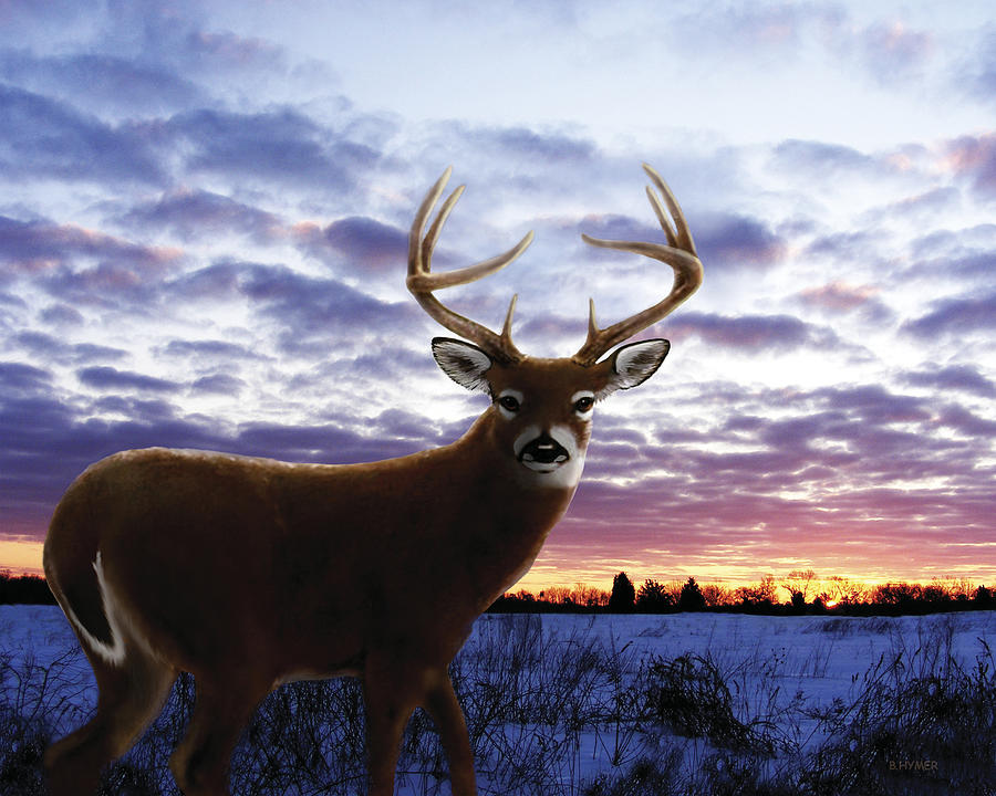 Whitetail Digital Art - Sunrise Buck by Barbara Hymer