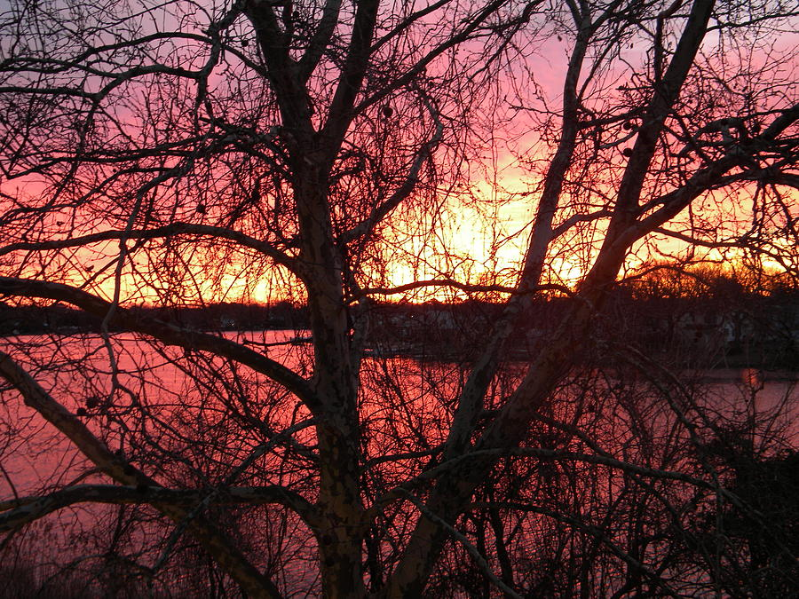 Tree Photograph - Sunrise by Cassandra Donnelly