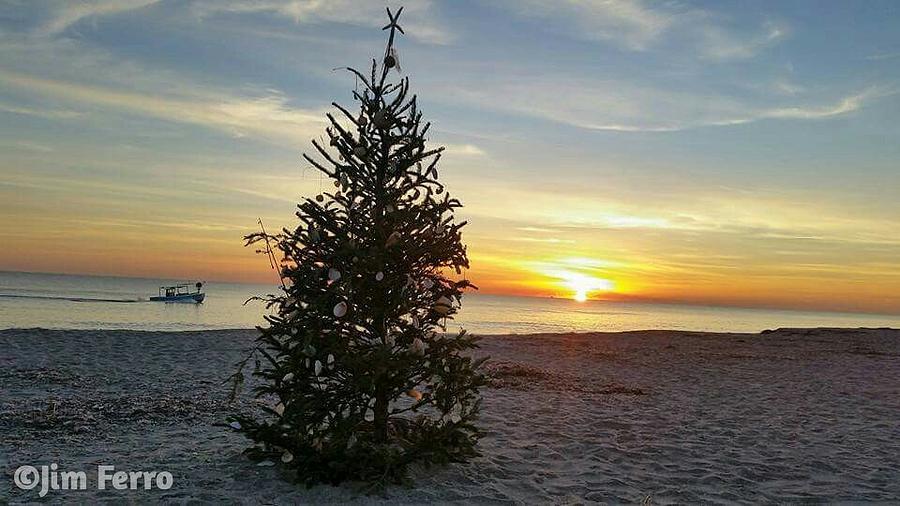 Sunrise christmas tree digital art by jim ferro