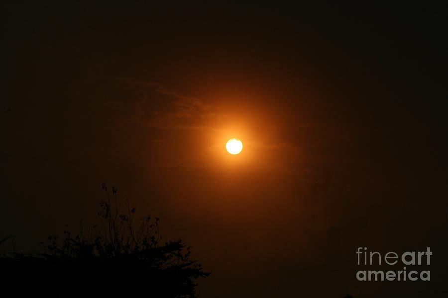 Sunrise  by Cynthia Marcopulos