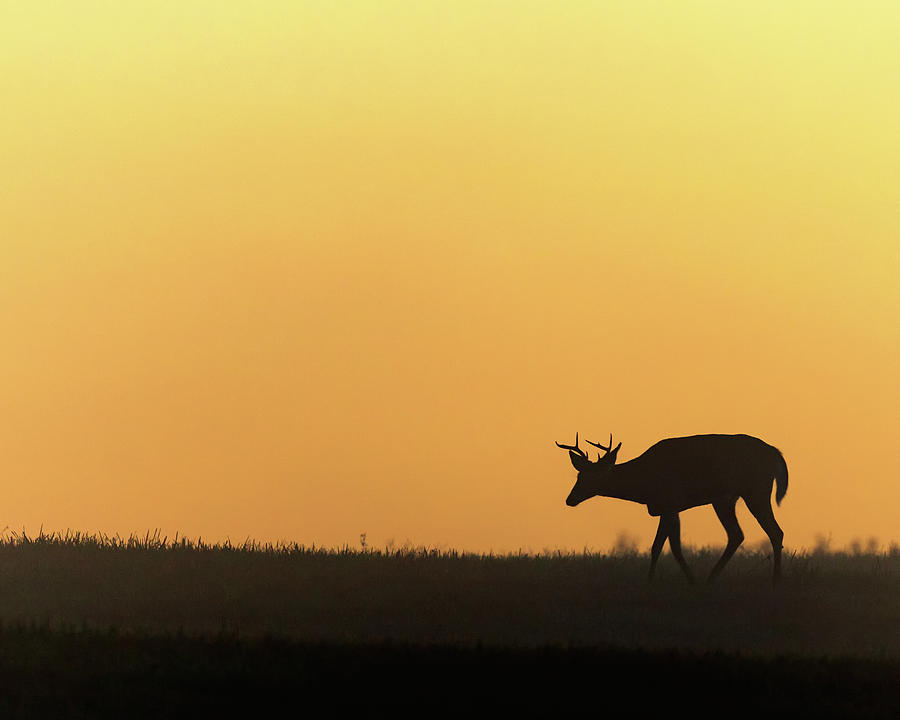 Silhouette Photograph - Sunrise Deer by Bill Wakeley