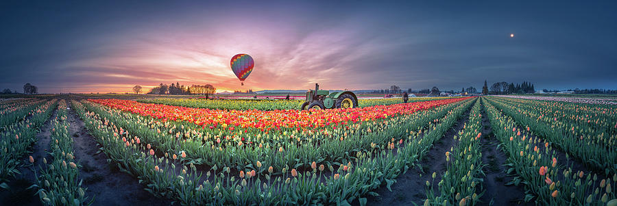 Sunrise, Hot Air Balloon And Moon Over The Tulip Field Photograph