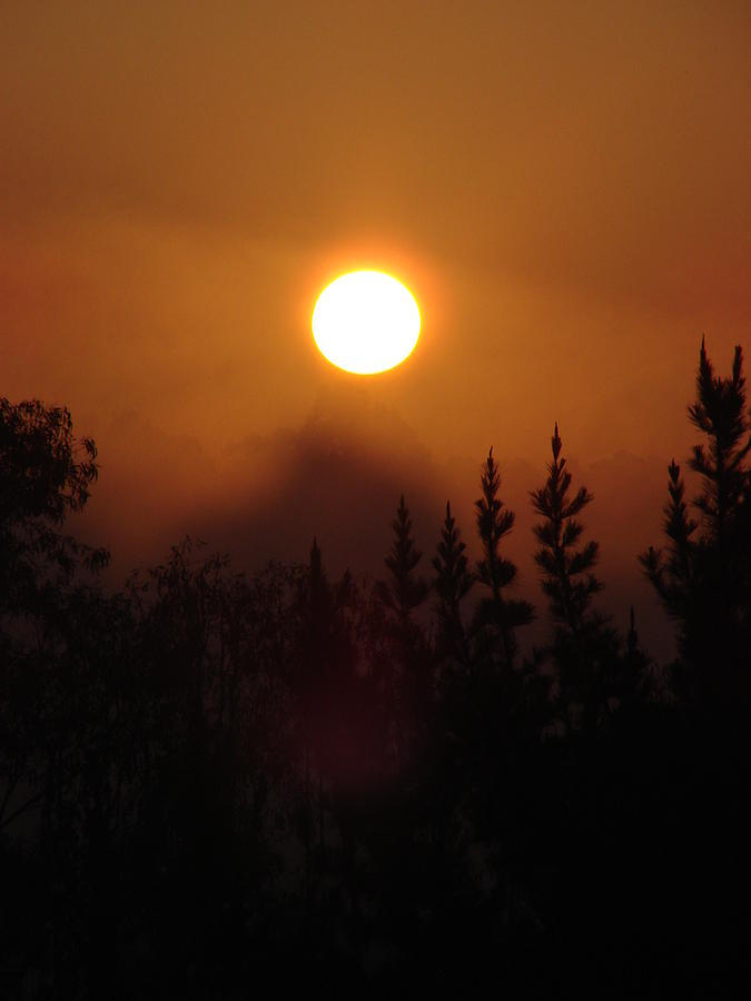 Sunrise Photograph - January 1, 2007 Sunrise In The Pines At Palos Verdes by Darlene DeMille