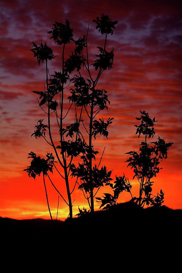 Sunrise Magic by Paul Marto