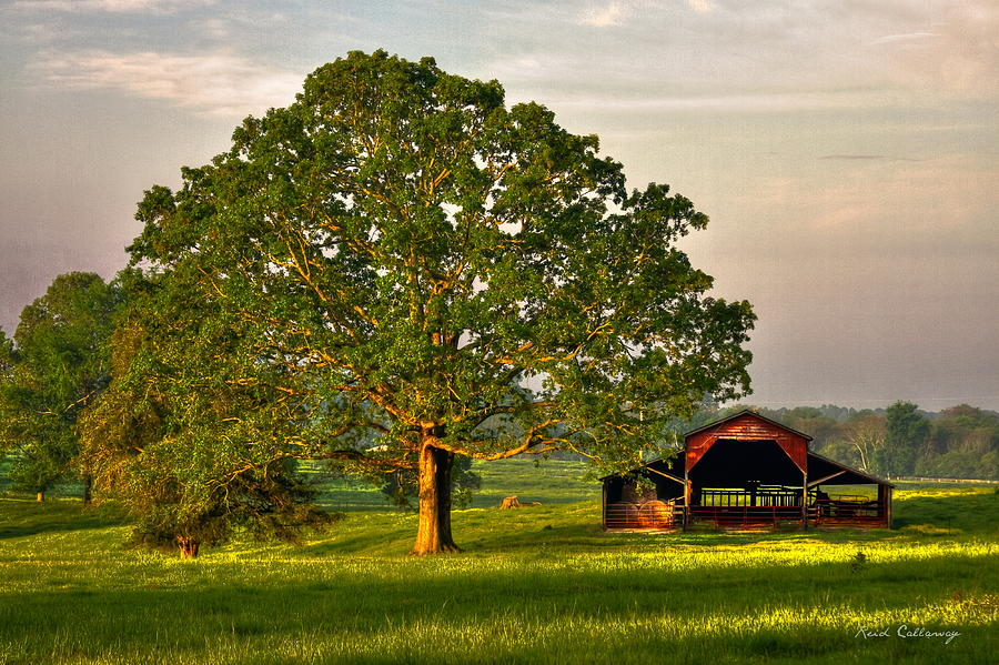 Sunrise Oak 2 The Red Barn Art by Reid Callaway