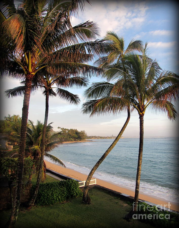 Oahu Photograph - Sunrise on Oahu Palm Trees by Joy Patzner