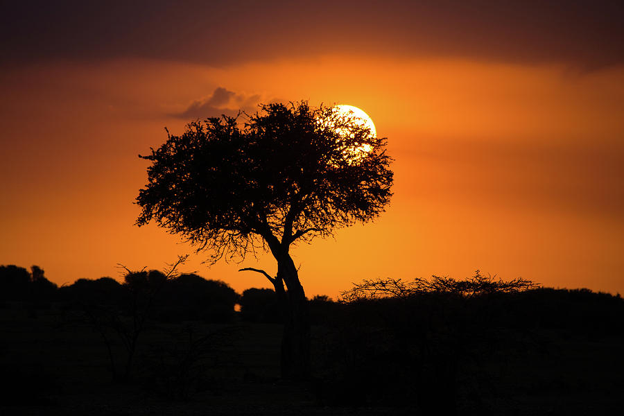 Sunrise on the Mara by Tim Stanley