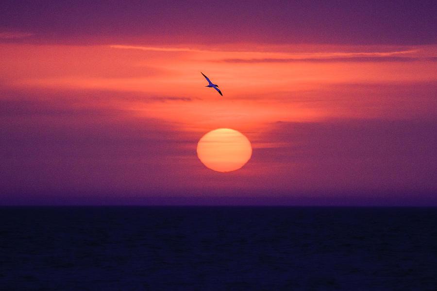 Assateague Photograph - Sunrise Seagul by Nathaniel Kidd
