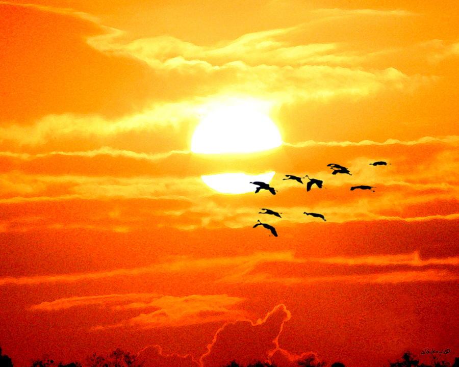 Nature Photograph - Sunrise / Sunset / Sandhill Cranes by W Gilroy