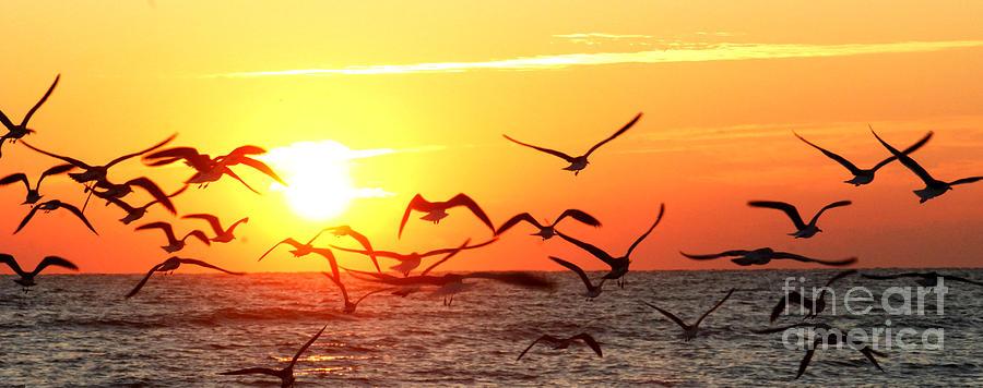 Sunrise by Terri Creasy
