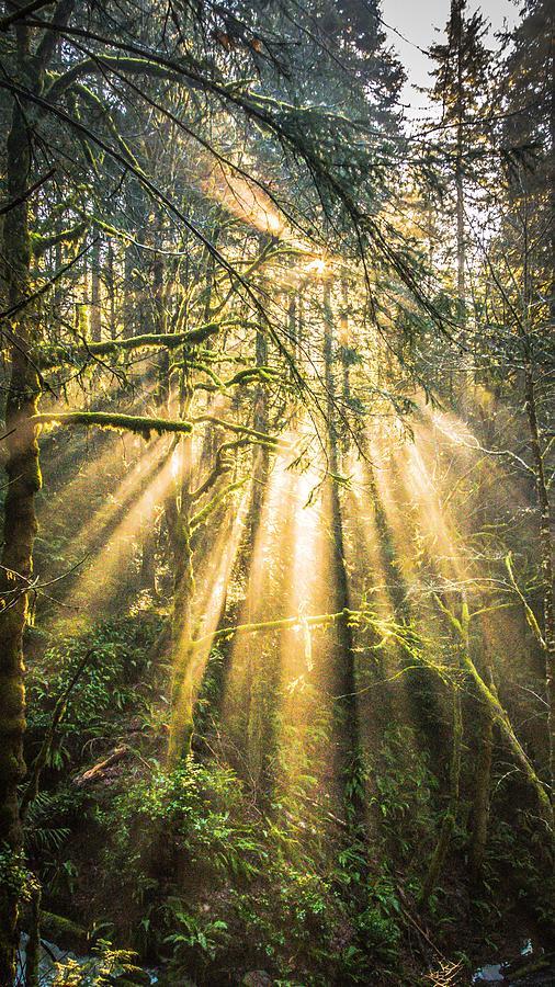 Forest Light by Ken Foster
